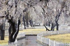 Ice tree Royalty Free Stock Photo