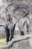 Ice tree Royalty Free Stock Photos