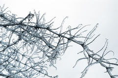 Ice on tree Stock Image
