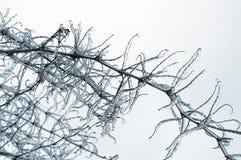 Ice on tree Stock Image
