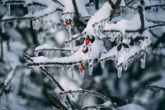Ice on the Tree Branch Royalty Free Stock Images