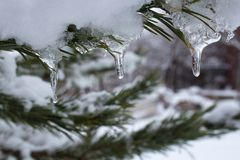 Ice on a tree branch. The ice on a tree branch in winter Stock Photography