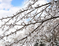 Ice On The Tree Branches Stock Photography