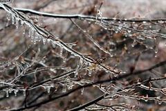 Ice on tree branches. Tree branches covered by ice Stock Images