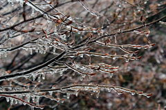 Ice on tree branches. Tree branches covered by ice Royalty Free Stock Images