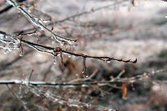 Ice on tree branches. Tree branches covered by ice Royalty Free Stock Image