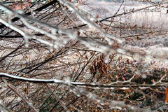 Ice on tree branches. Tree branches covered by ice Royalty Free Stock Photography