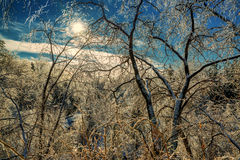Ice Tree Branches Sparkling in the Sun Royalty Free Stock Photography