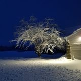 Ice Tree in Evening Royalty Free Stock Photo
