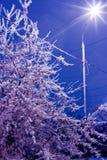 Ice tree. Night winter. The icy tree shines a streetlight Stock Photo