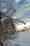 Ice on tree. Ice on the trees in winter Royalty Free Stock Images