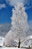 Ice Tree Winter Romania Royalty Free Stock Photos