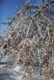 Ice tree. Winter sunny day. The frozen branches of trees against the blue sky Stock Photos
