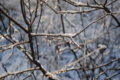 Ice on trees royalty free stock photography