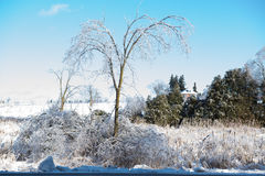 Ice Trees Snowy Field. Beautiful bright blue sky, sunny day. Ice covered trees and bushes. Green trees in background, snowy farm field Stock Photos
