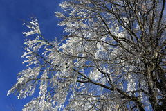 Ice on the trees, winter landscape, Železná Ruda, Czech Republic Stock Photo