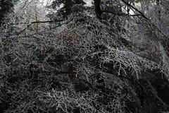 Ice on the trees, winter landscape, Železná Ruda, Czech Republic Royalty Free Stock Photography