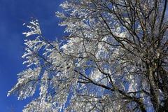 Ice on the trees, winter landscape, Železná Ruda, Czech Republic Stock Photo