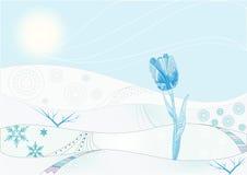 Ice tulip Stock Photo