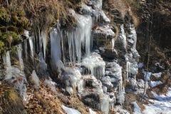 Ice on the vegetation Stock Photos