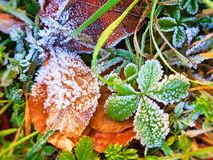 Ice vegetation Royalty Free Stock Photos