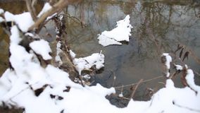 Ice water running in a fast spring stream. Snow melts on tree branch over creek. Close up shot of running streams of clean ice water. Spring has come. Snow stock footage