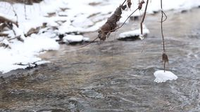 Ice water running in a fast spring stream. Tree branches hanging over the creek stock video