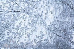 Ice on a window Royalty Free Stock Photography