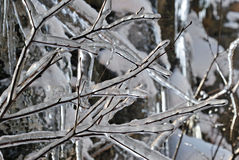 Ice on winter branches. Ice cover naked tree branches Stock Photo
