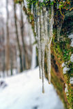 Ice in the Winter Forrest. Amazing bavarian Winter Forrest in Germany with Icicles Royalty Free Stock Image