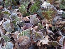 Ice , Winter, natur, frozen green. Frozen natur winter royalty free stock image