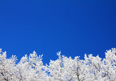 Ice winter tree branches under sky Stock Photography
