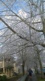 Ice Winter Wonderland Royalty Free Stock Image