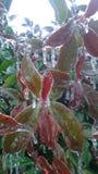 Ice Winter Wonderland Royalty Free Stock Photo