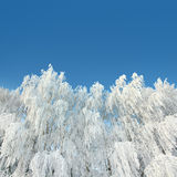Ice winter woods under sky Royalty Free Stock Images