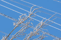 Ice on wires Royalty Free Stock Photos