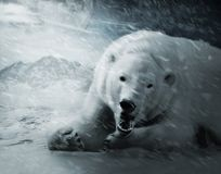 IceBear. At night in blizzard Stock Images