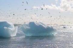 iceberg Photographie stock libre de droits