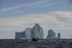 iceberg obrazy stock