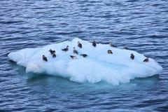 Iceberg avec des oiseaux de mer Image stock