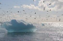 Iceberg. And birds on the Atlantic Stock Image