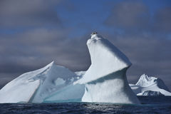 Iceberg with birds Royalty Free Stock Images