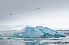 Iceberg blu Immagini Stock Libere da Diritti