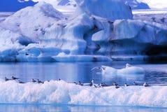 iceberg d'oiseaux Images stock