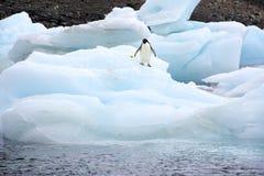 Iceberg de Adeile Fotos de archivo