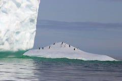 Iceberg de l'Antarctique Images libres de droits