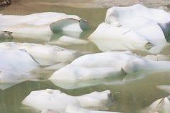 Iceberg di galleggiamento Fotografia Stock Libera da Diritti