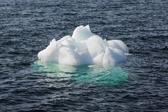 Iceberg di nuotata Nuuk, Groenlandia Maggio 2014 Fotografia Stock