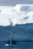 Iceberg in Greenland. Melting Iceberg at one of the world`s largest glaciers - Ilulissat - Greenland Stock Photo