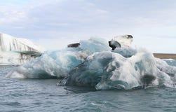 Iceberg in Islanda immagine stock libera da diritti